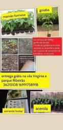 Título do anúncio: Compostagem totalmente orgânica p vc criar ou cultivar hortas jardins e pomares