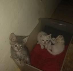 Gatos filhotes para adoção