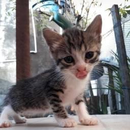 3 Gatinhas disponíveis para adoção urgente