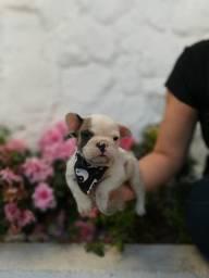 Bulldog Francês com Garantia de Saúde.