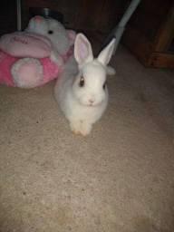 Título do anúncio: Mini coelho