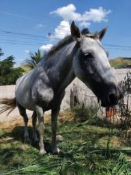 Cavalo ótimo para montaria