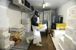 Título do anúncio: Vaga para Estoquista em Distribuidora de Alimentos Fazendinha/Campo Comprido