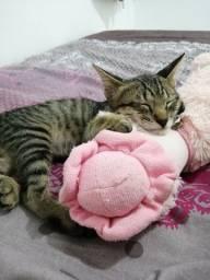 Gato com cerca de 2 meses para adoção urgente