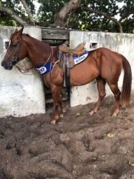 Título do anúncio: Vendo cavalo vaquejada idade 8 anos