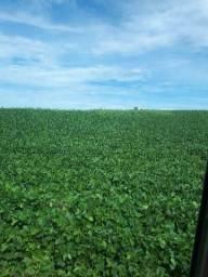 Busco fazenda pra arrendamento no Paraná