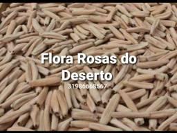 Rosas do Deserto em