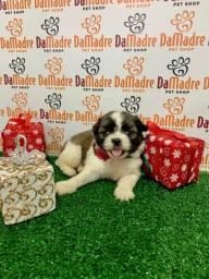 Lhasa Apso é no Da Madre Pet Shop
