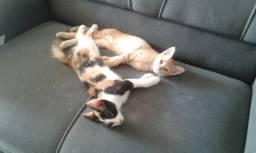 Doações  de 2 gatas