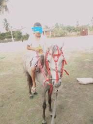 Título do anúncio: Cavalo anã muito dorcil pra criança E intradeiro