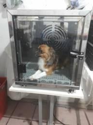 Somente hoje Maquina de secar Gato e Cachorro