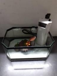 Aquário de Tartaruga com filtro (novo)