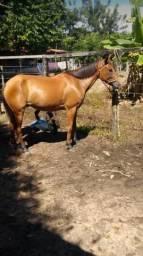 Égua com potra égua de Prado