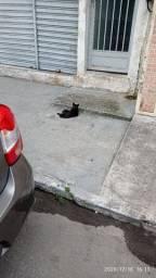 Gato preto filhote doação adoção Rio de janeiro