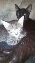 Gatos lindíssimos