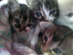 Título do anúncio: Gatinhos Filhotes Adoção
