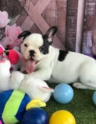 Título do anúncio: Bulldog Francês Lindos Filhotes á Disposição!!!