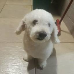 Poodle microtoy