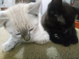 Duas Gatinhas Fêmeas para Doação