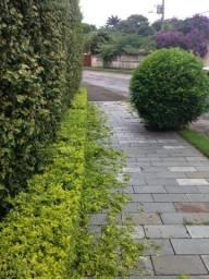 Podas, corte de árvores e jardinagem em geral