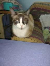 Doação Desa linda gatinha resgatei das ruas