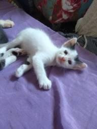 Doa-se lindos filhotes de gato