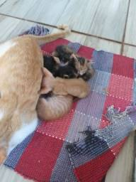 Gatinhos bonitos para doação