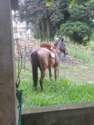 Título do anúncio: Cavalo appalossa