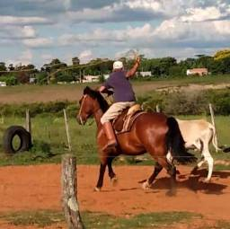 Vendo cavalo crioulo puro sem papel
