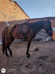 Título do anúncio: Cavalo carroceiro e bom de sela