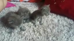 Lindussss filhotes de gatinhos muito raros