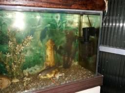 Vendo aquário 80 lt