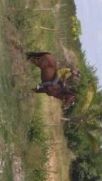 Pra Vender Ligeiro Cavalo Mestiço D QM