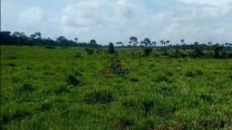 Belíssima Fazenda a venda na cidade de nova Califórnia, divisa entre Rondônia e Acre