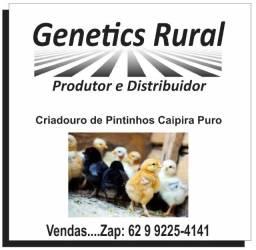 Genetics Rural