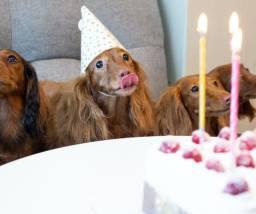 Bolo De Aniversário Para Cães:Você Ama seu Pet?