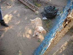 Cachorro encontrado
