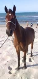 Título do anúncio: Cavalo de 6 anos mesticos