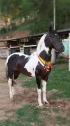 Cavalo Pampa de preto ( coberturas )