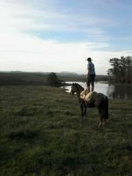 Vendo cavalo mouro de presença