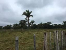 Vendo Fazenda no Pantanal de Mato Grosso com 6400 hectares
