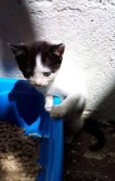 Título do anúncio: Doa filhotinho de gato angora com siames nasceu dia nasceu 20/08