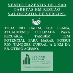1200 tarefas em Região Valorizada de SErgipe,no capim,80%plana, 2km da BR, bom p/ Haras