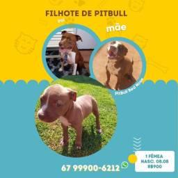 Título do anúncio: Filhote PitBull