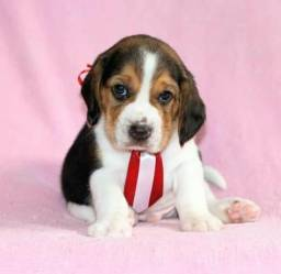 Título do anúncio: Beagle baby