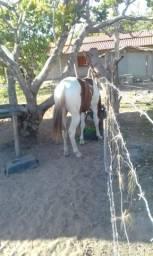 Potro Paint horse !!!!