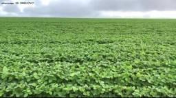Fazenda para Venda em Jaciara, Jaciara