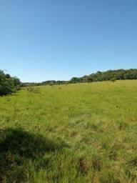 Fazenda 83 Alqueires | Região Sancrerlandia | analisa prazos