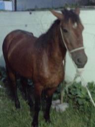 Título do anúncio: Troco cavalo manga larga 3 anos