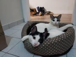 Título do anúncio: Gatinhas filhotes para adoção